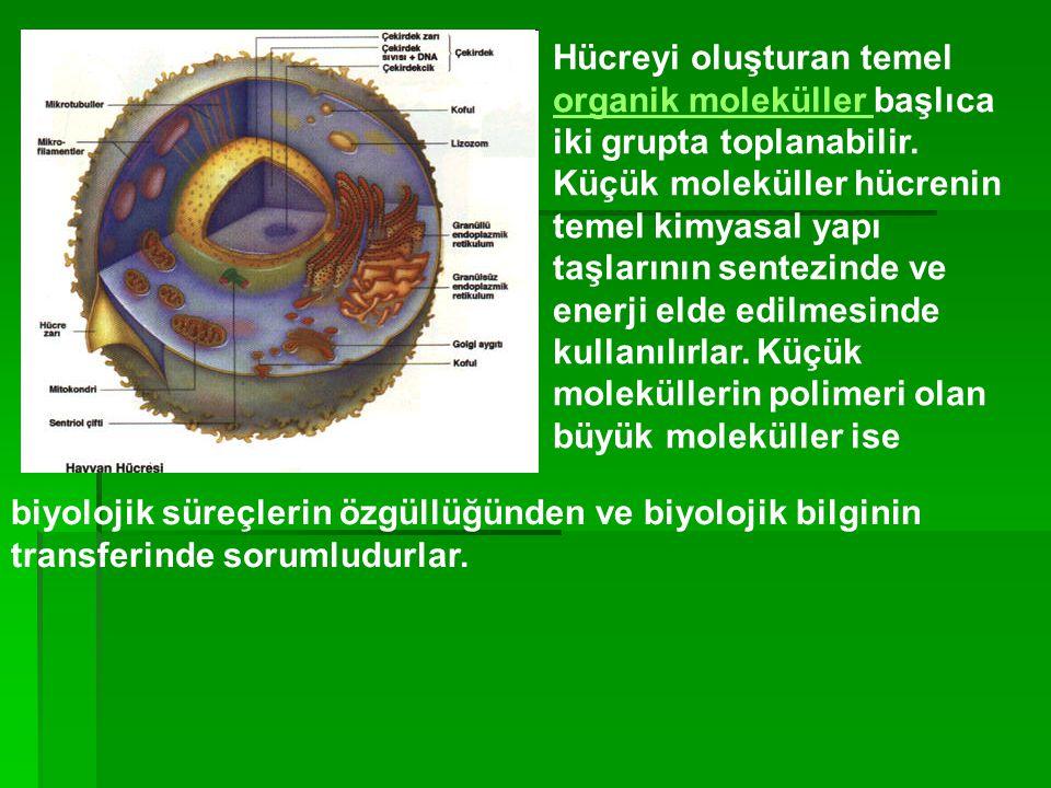 Hücreyi oluşturan temel organik moleküller başlıca iki grupta toplanabilir. Küçük moleküller hücrenin temel kimyasal yapı taşlarının sentezinde ve ene