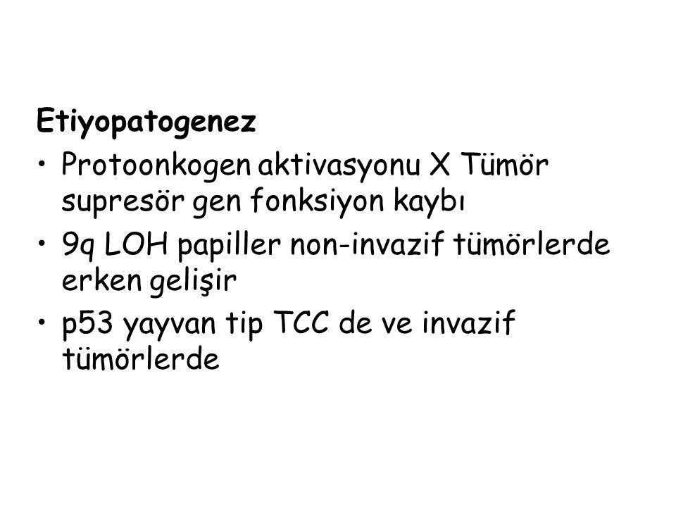 Etiyopatogenez Protoonkogen aktivasyonu X Tümör supresör gen fonksiyon kaybı 9q LOH papiller non-invazif tümörlerde erken gelişir p53 yayvan tip TCC de ve invazif tümörlerde