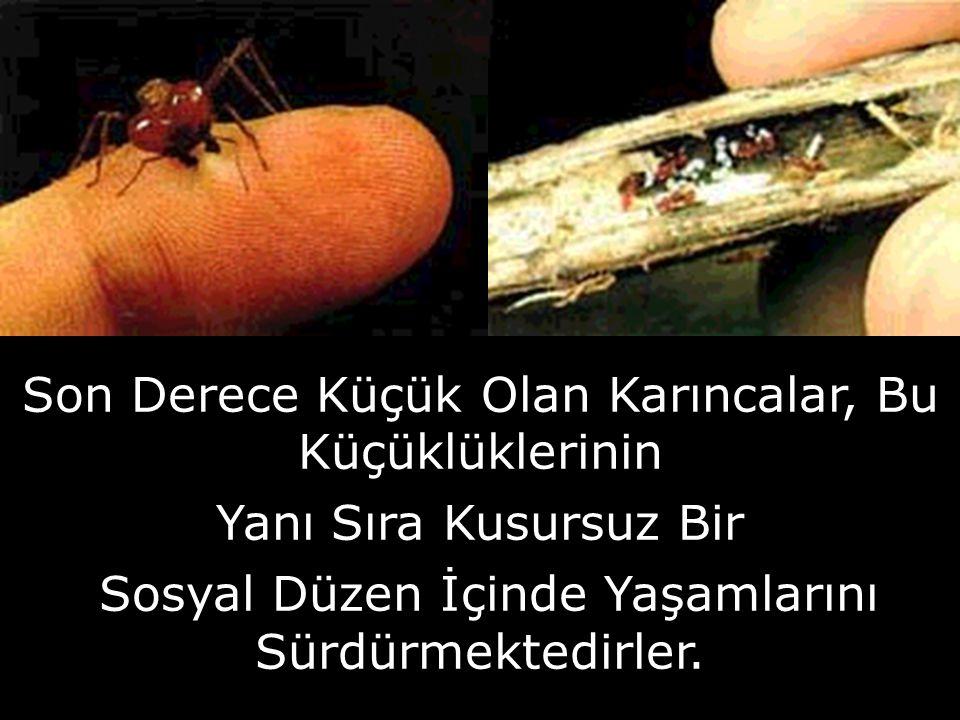 OMURGASIZ HAYVANLAR Sünger Denizanası solucan örümcek böcek