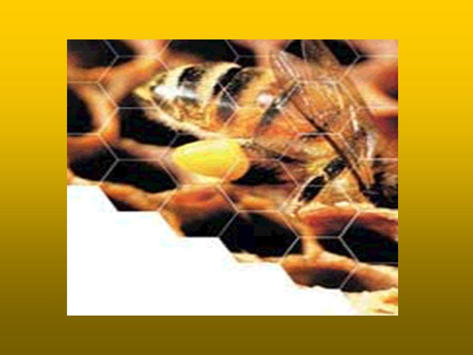 Son Derece Küçük Olan Karıncalar, Bu Küçüklüklerinin Yanı Sıra Kusursuz Bir Sosyal Düzen İçinde Yaşamlarını Sürdürmektedirler.