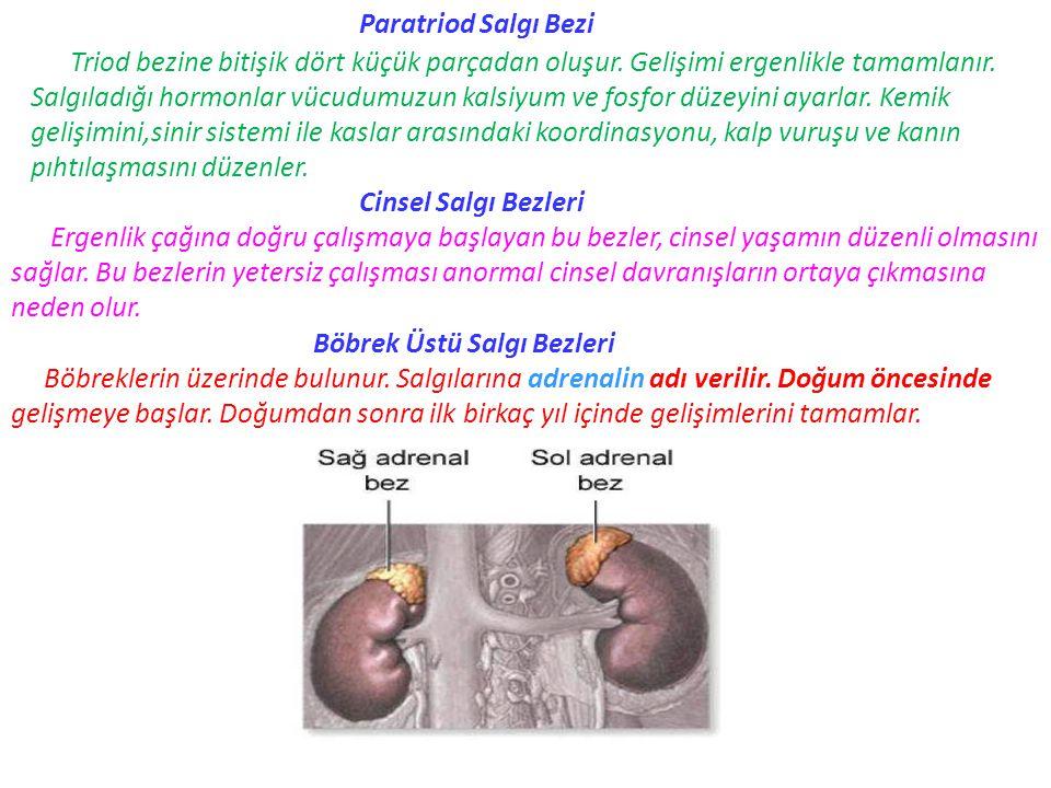 Paratriod Salgı Bezi Triod bezine bitişik dört küçük parçadan oluşur. Gelişimi ergenlikle tamamlanır. Salgıladığı hormonlar vücudumuzun kalsiyum ve fo