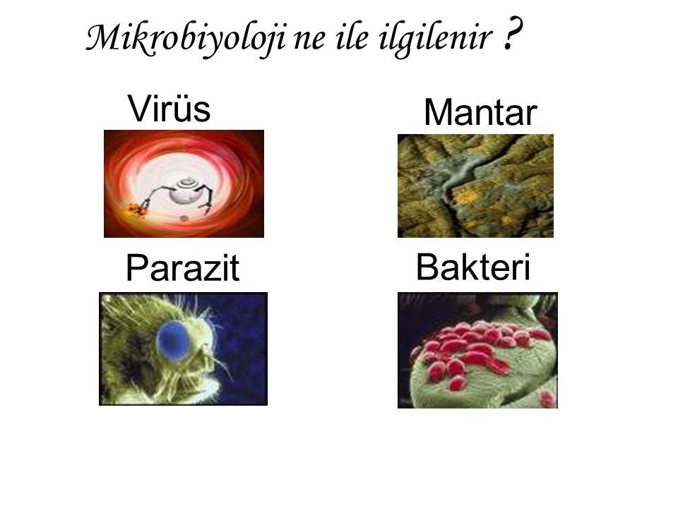 Virüs Mantar Parazit Bakteri Mikrobiyoloji ne ile ilgilenir ?