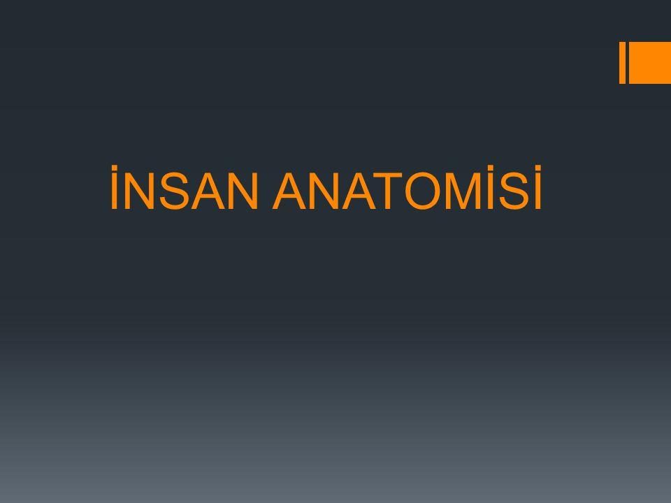  İnsan anatomisi (anatomia humana),insan vücudunun normal şekil,büyüklük ve yapısı ile gelişimini inceleyen en eski temel medikal bir bilim dalıdır.Anatomi terimi etimolojik olarak Grek orijinli olup ana=artı.artan biçimde,tomia =kesmek.açmak parçalara ayırmak terimlerinden oluşmuştur.Latince kökenli dissectio terimi de anatomi ile aynı anlamı taşımakla beraber,dissectio günümüzde anatomi öğretiminin vazgeçilmez yöntemi olan kadavra uyğulamasını belirtmek amacı ile Kullanılır.