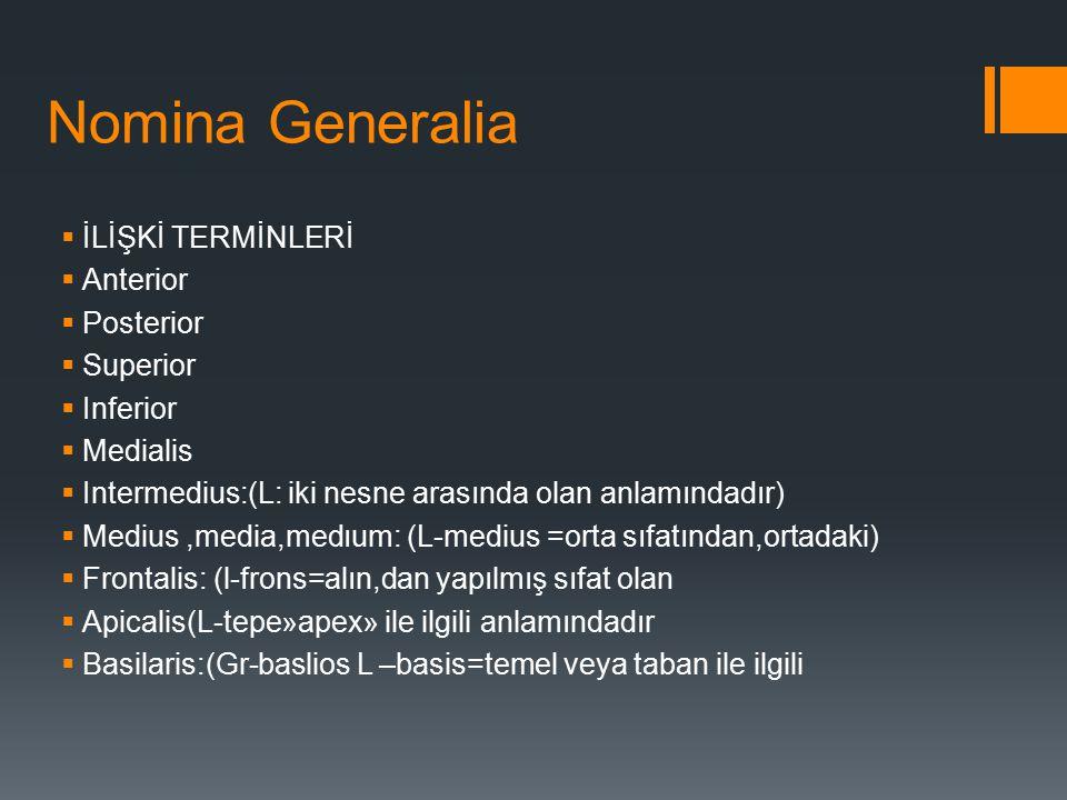 Nomina Generalia  İLİŞKİ TERMİNLERİ  Anterior  Posterior  Superior  Inferior  Medialis  Intermedius:(L: iki nesne arasında olan anlamındadır) 