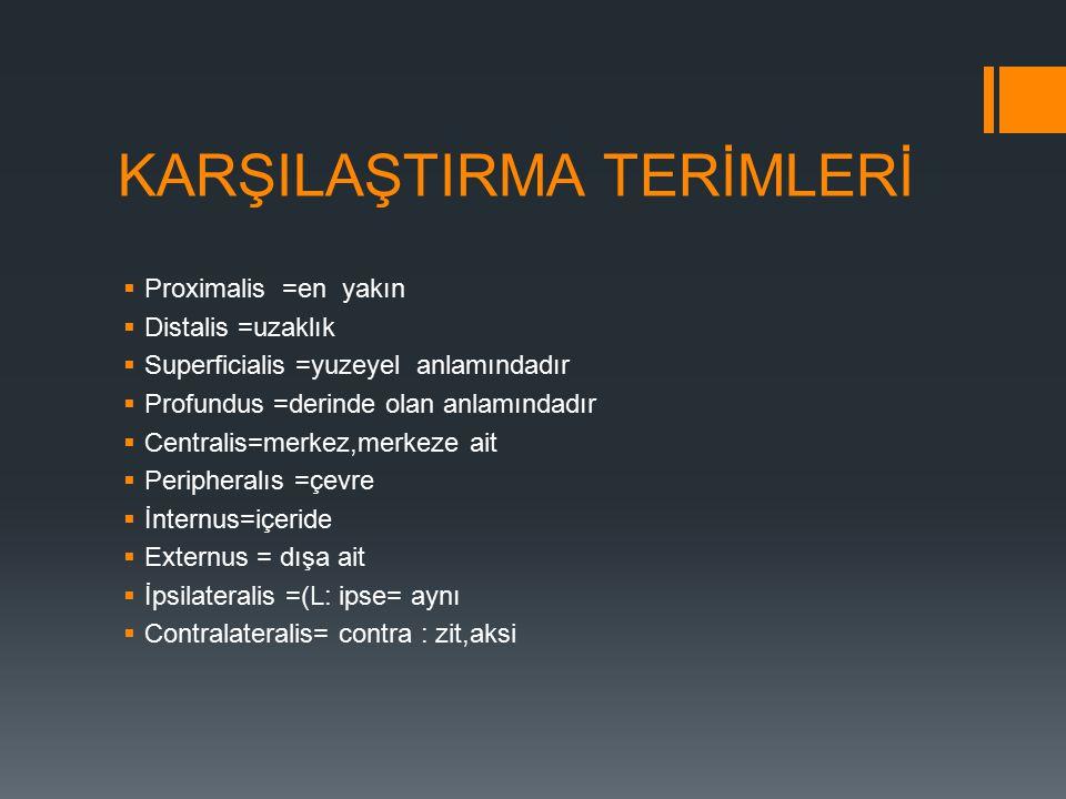 KARŞILAŞTIRMA TERİMLERİ  Proximalis =en yakın  Distalis =uzaklık  Superficialis =yuzeyel anlamındadır  Profundus =derinde olan anlamındadır  Centralis=merkez,merkeze ait  Peripheralıs =çevre  İnternus=içeride  Externus = dışa ait  İpsilateralis =(L: ipse= aynı  Contralateralis= contra : zit,aksi