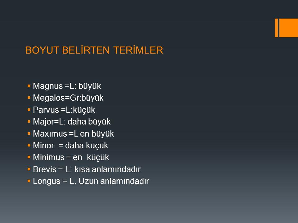 BOYUT BELİRTEN TERİMLER  Magnus =L: büyük  Megalos=Gr:büyük  Parvus =L:küçük  Major=L: daha büyük  Maxımus =L en büyük  Minor = daha küçük  Min