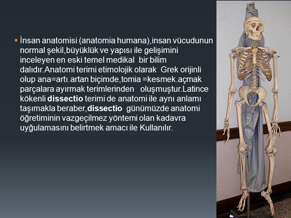  İnsan anatomisi (anatomia humana),insan vücudunun normal şekil,büyüklük ve yapısı ile gelişimini inceleyen en eski temel medikal bir bilim dalıdır.A