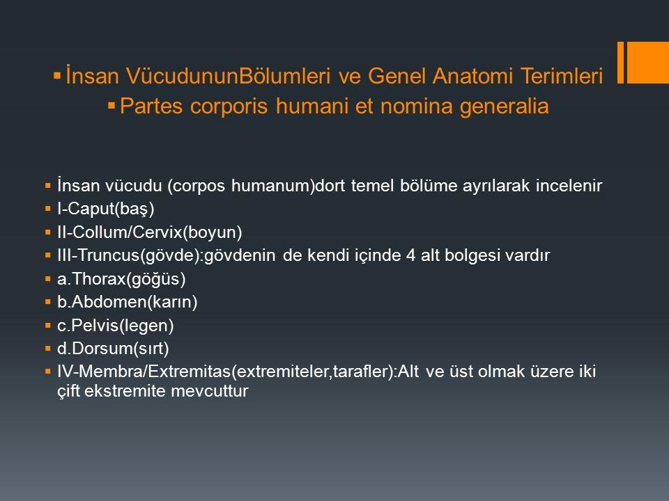  İnsan VücudununBölumleri ve Genel Anatomi Terimleri  Partes corporis humani et nomina generalia  İnsan vücudu (corpos humanum)dort temel bölüme ayrılarak incelenir  I-Caput(baş)  II-Collum/Cervix(boyun)  III-Truncus(gövde):gövdenin de kendi içinde 4 alt bolgesi vardır  a.Thorax(göğüs)  b.Abdomen(karın)  c.Pelvis(legen)  d.Dorsum(sırt)  IV-Membra/Extremitas(extremiteler,tarafler):Alt ve üst olmak üzere iki çift ekstremite mevcuttur