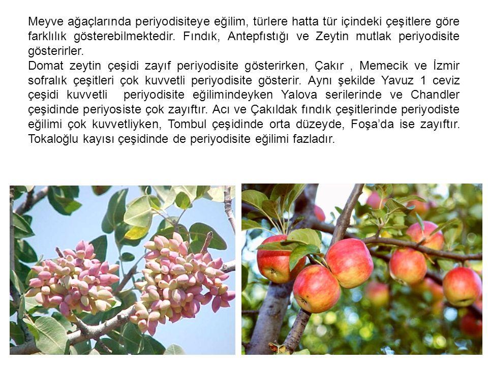 Meyve ağaçlarında periyodisiteye eğilim, türlere hatta tür içindeki çeşitlere göre farklılık gösterebilmektedir. Fındık, Antepfıstığı ve Zeytin mutlak