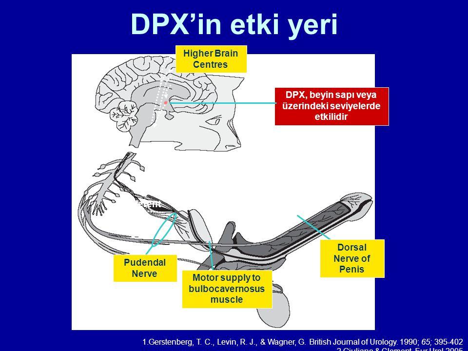 DPX'in etki yeri Pudendal Nerve afferent Dorsal Nerve of Penis Motor supply to bulbocavernosus muscle Higher Brain Centres DPX, beyin sapı veya üzerin