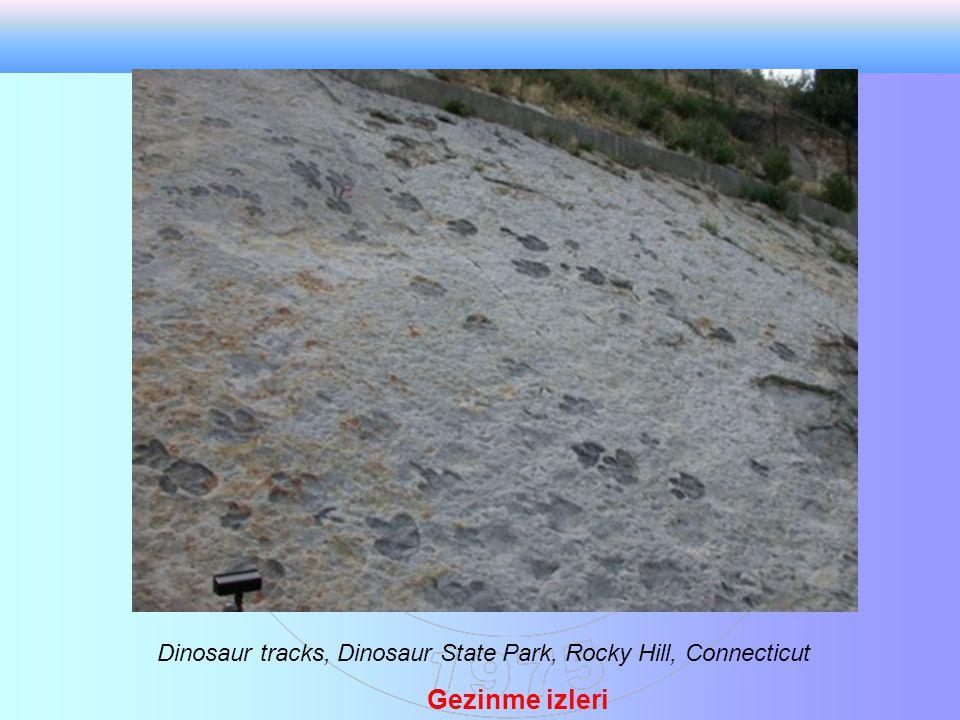 A theropod dinasor footprint.