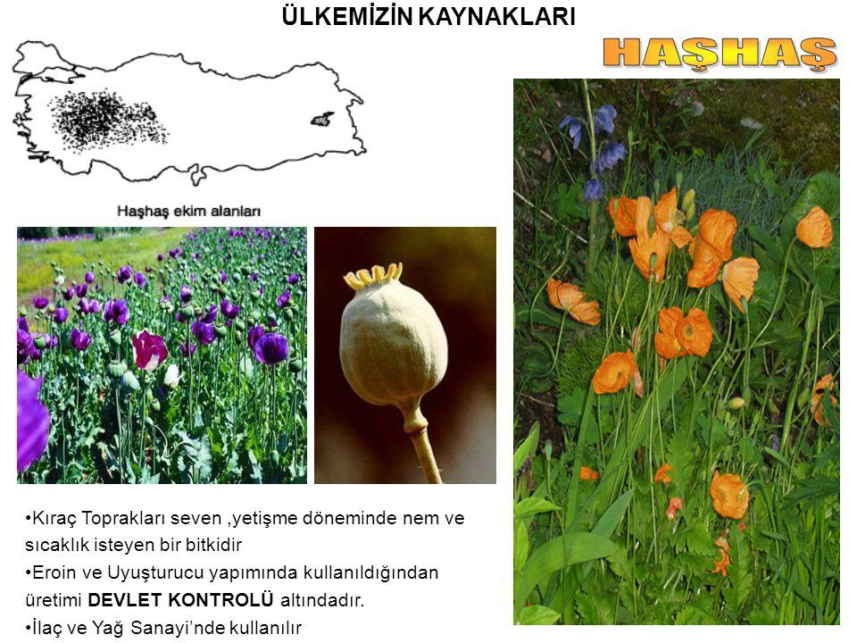 ÜLKEMİZİN KAYNAKLARI Kıraç Toprakları seven,yetişme döneminde nem ve sıcaklık isteyen bir bitkidir Eroin ve Uyuşturucu yapımında kullanıldığından üret