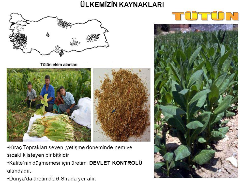 ÜLKEMİZİN KAYNAKLARI Kıraç Toprakları seven,yetişme döneminde nem ve sıcaklık isteyen bir bitkidir Kalite'nin düşmemesi için üretimi DEVLET KONTROLÜ a
