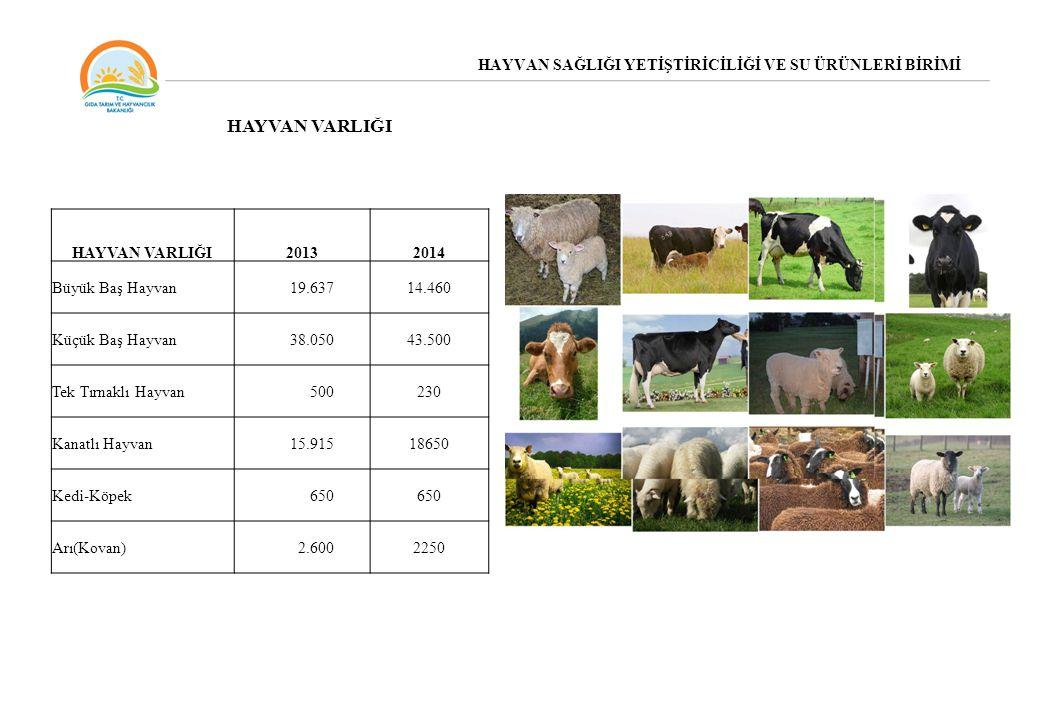 HAYVAN SAĞLIĞI YETİŞTİRİCİLİĞİ VE SU ÜRÜNLERİ BİRİMİ HAYVAN VARLIĞI 20132014 Büyük Baş Hayvan19.63714.460 Küçük Baş Hayvan38.05043.500 Tek Tırnaklı Ha