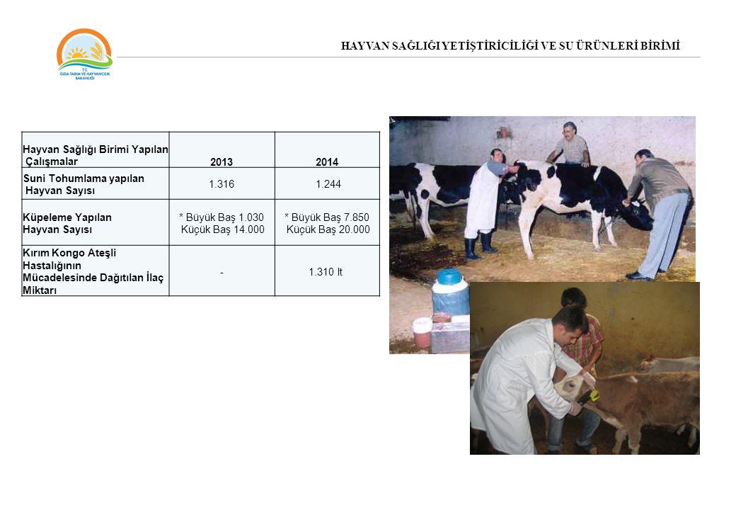 HAYVAN SAĞLIĞI YETİŞTİRİCİLİĞİ VE SU ÜRÜNLERİ BİRİMİ Hayvan Sağlığı Birimi Yapılan Çalışmalar20132014 Suni Tohumlama yapılan Hayvan Sayısı 1.316 1.244