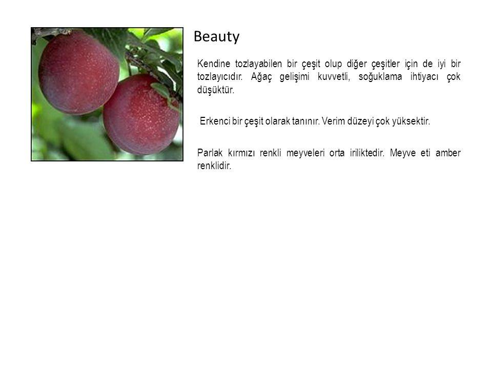 Beauty Kendine tozlayabilen bir çeşit olup diğer çeşitler için de iyi bir tozlayıcıdır.