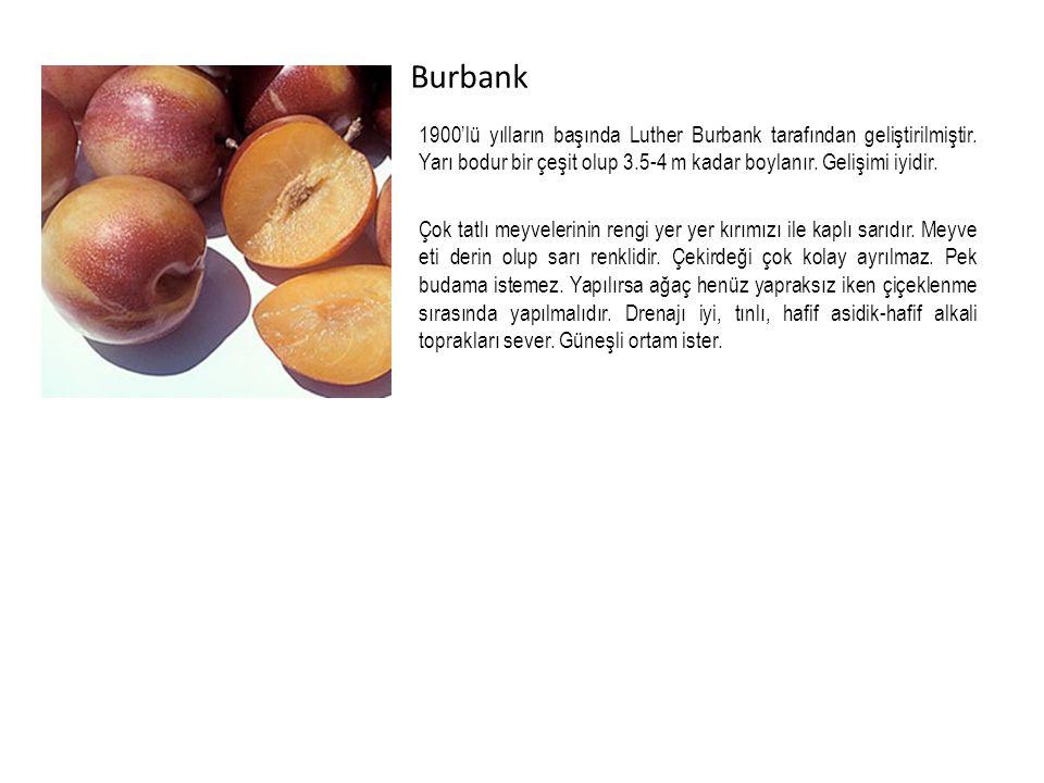 Burbank 1900'lü yılların başında Luther Burbank tarafından geliştirilmiştir.