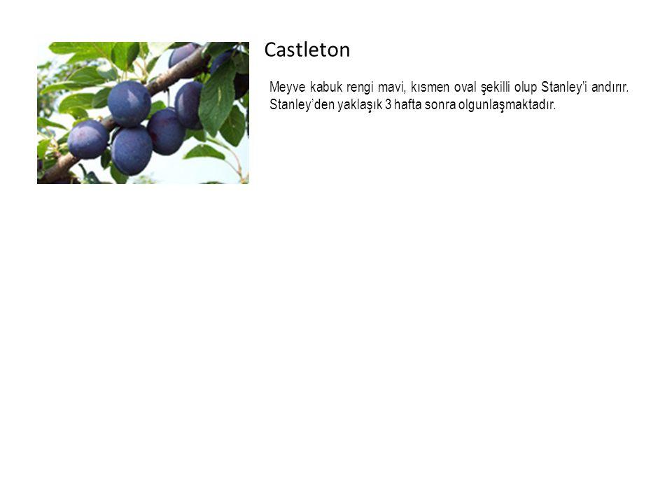 Castleton Meyve kabuk rengi mavi, kısmen oval şekilli olup Stanley'i andırır.