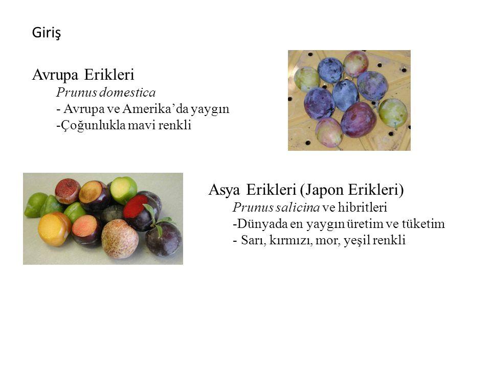 Giriş © TrAgLor, 2008 Asya Erikleri (Japon Erikleri) Prunus salicina ve hibritleri -Dünyada en yaygın üretim ve tüketim - Sarı, kırmızı, mor, yeşil renkli Avrupa Erikleri Prunus domestica - Avrupa ve Amerika'da yaygın -Çoğunlukla mavi renkli