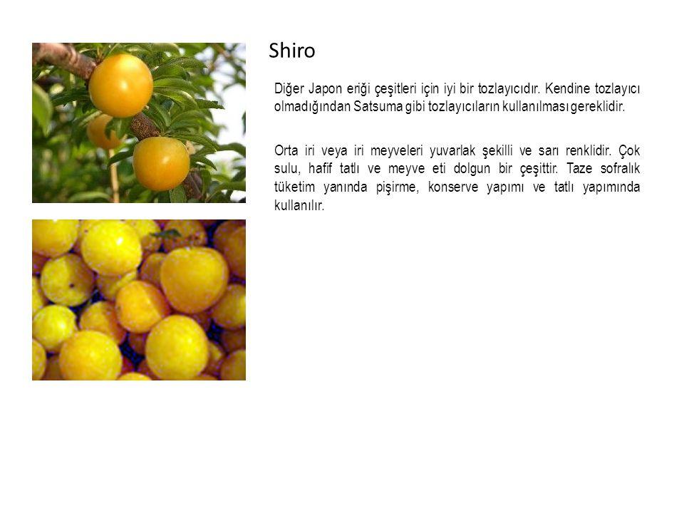 Shiro Diğer Japon eriği çeşitleri için iyi bir tozlayıcıdır.
