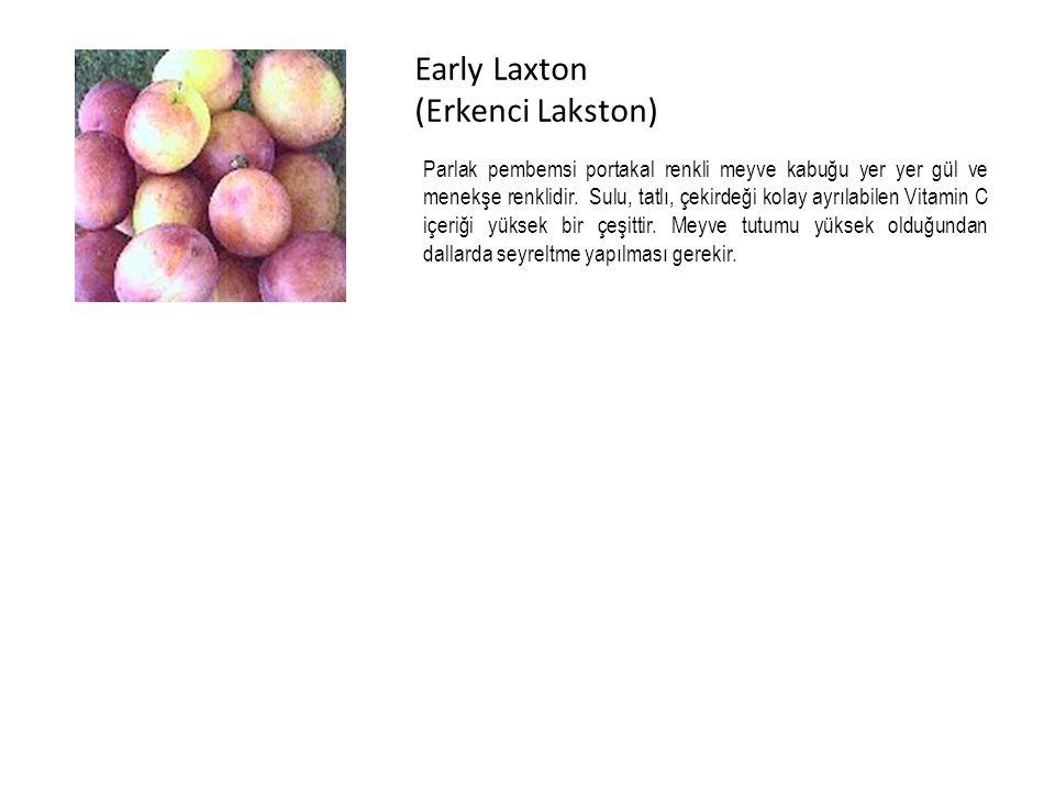 Early Laxton (Erkenci Lakston) Parlak pembemsi portakal renkli meyve kabuğu yer yer gül ve menekşe renklidir.