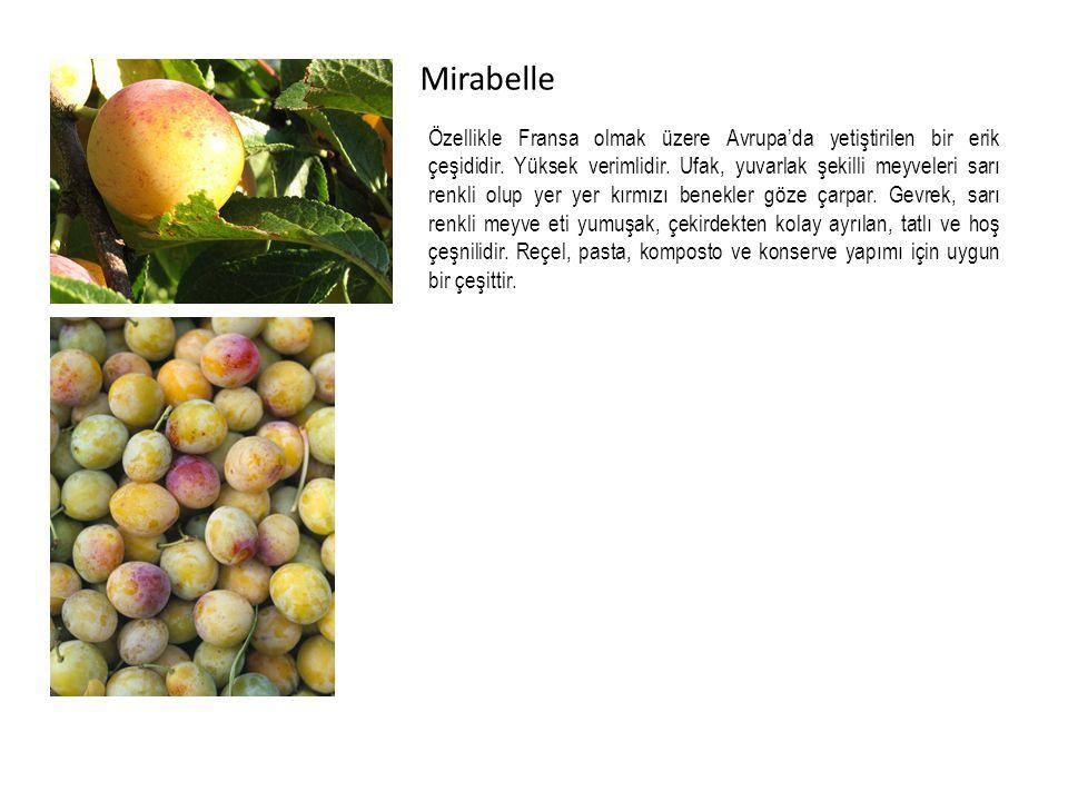 Mirabelle Özellikle Fransa olmak üzere Avrupa'da yetiştirilen bir erik çeşididir.