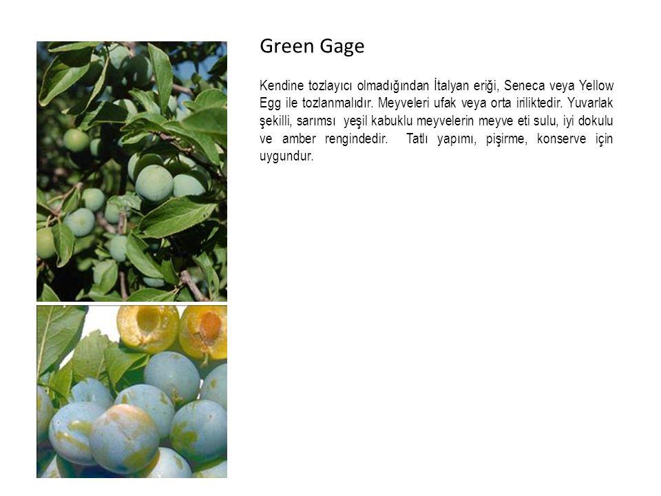 Green Gage Kendine tozlayıcı olmadığından İtalyan eriği, Seneca veya Yellow Egg ile tozlanmalıdır.