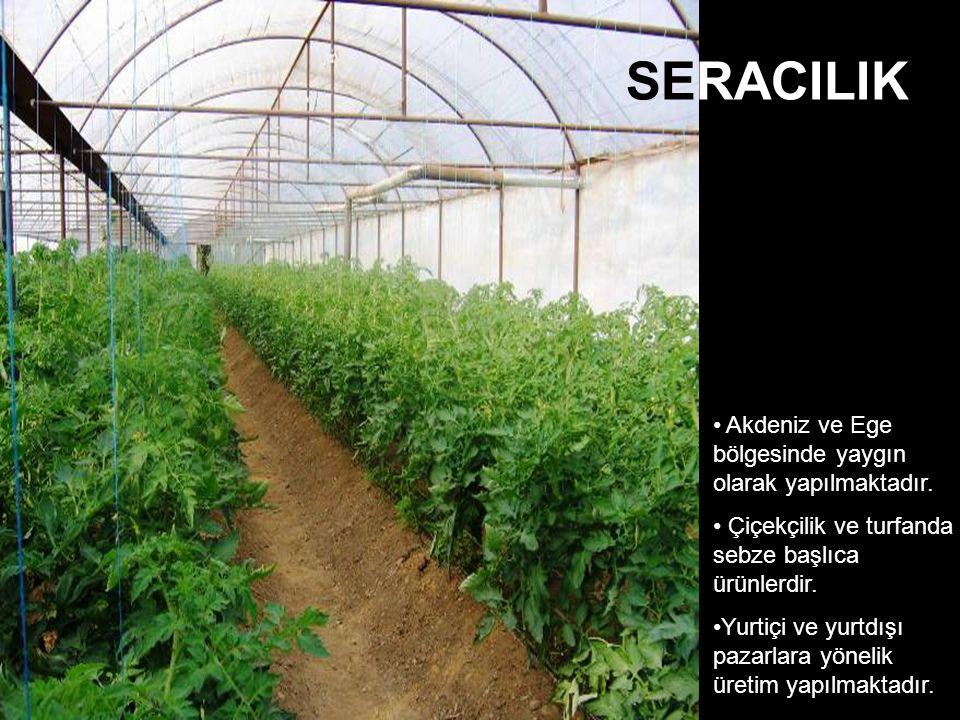 Akdeniz ve Ege bölgesinde yaygın olarak yapılmaktadır. Çiçekçilik ve turfanda sebze başlıca ürünlerdir. Yurtiçi ve yurtdışı pazarlara yönelik üretim y
