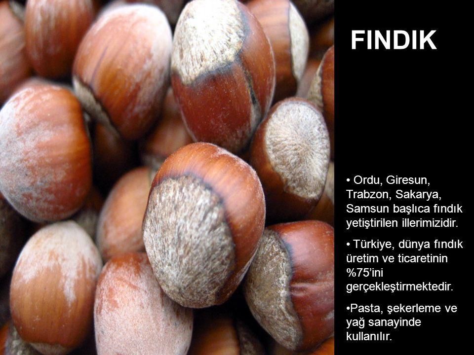 Ordu, Giresun, Trabzon, Sakarya, Samsun başlıca fındık yetiştirilen illerimizidir.