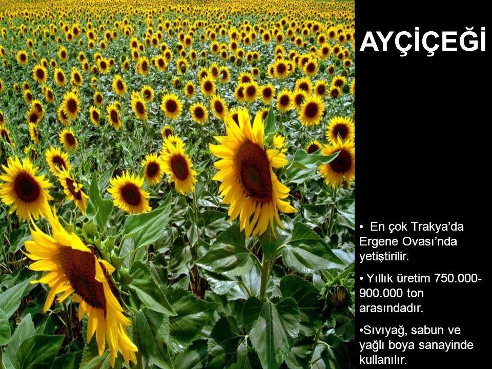En çok Trakya'da Ergene Ovası'nda yetiştirilir. Yıllık üretim 750.000- 900.000 ton arasındadır. Sıvıyağ, sabun ve yağlı boya sanayinde kullanılır. AYÇ