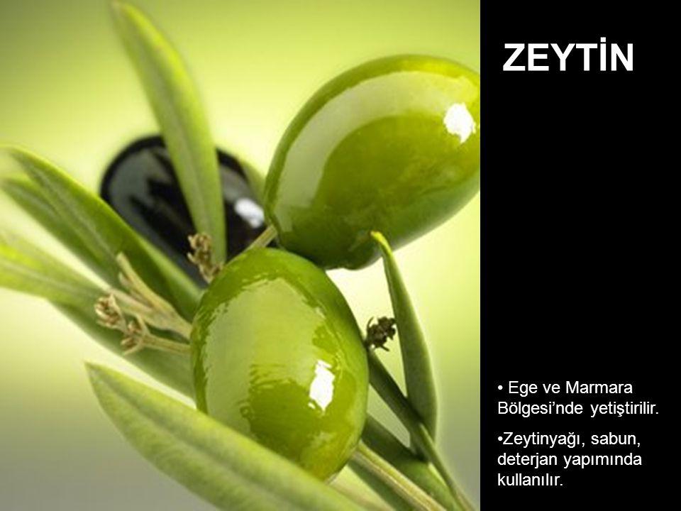 Ege ve Marmara Bölgesi'nde yetiştirilir. Zeytinyağı, sabun, deterjan yapımında kullanılır. ZEYTİN
