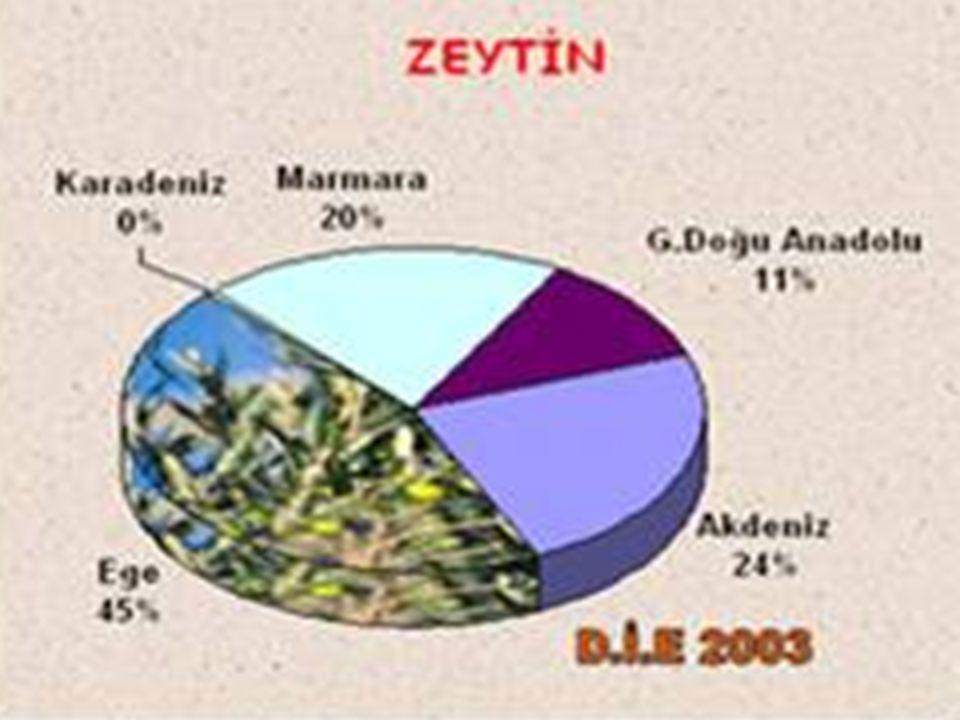 Marmara Bölgesi, özellikle Kocaeli ve İstanbul çevresinde yoğundur.
