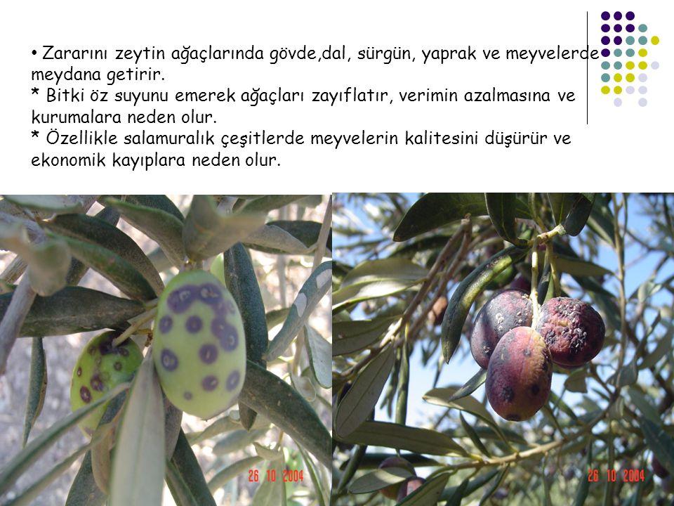 Zararını zeytin ağaçlarında gövde,dal, sürgün, yaprak ve meyvelerde meydana getirir.
