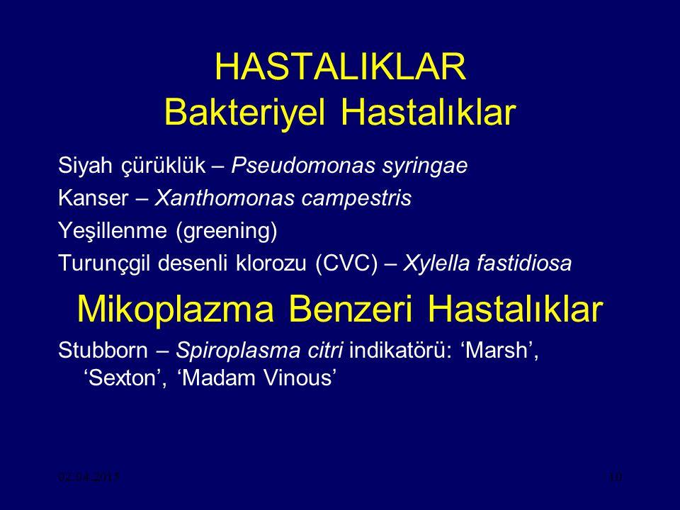 02.04.201510 HASTALIKLAR Bakteriyel Hastalıklar Siyah çürüklük – Pseudomonas syringae Kanser – Xanthomonas campestris Yeşillenme (greening) Turunçgil desenli klorozu (CVC) – Xylella fastidiosa Mikoplazma Benzeri Hastalıklar Stubborn – Spiroplasma citri indikatörü: 'Marsh', 'Sexton', 'Madam Vinous'