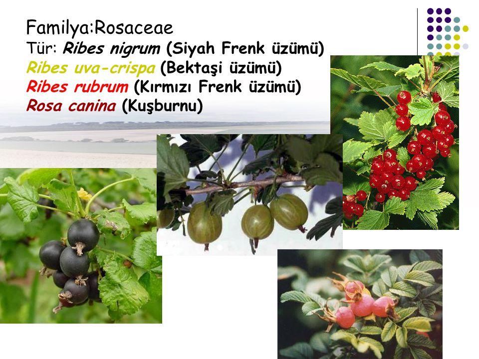 Familya:Rosaceae Tür: Ribes nigrum (Siyah Frenk üzümü) Ribes uva-crispa (Bektaşi üzümü) Ribes rubrum (Kırmızı Frenk üzümü) Rosa canina (Kuşburnu)
