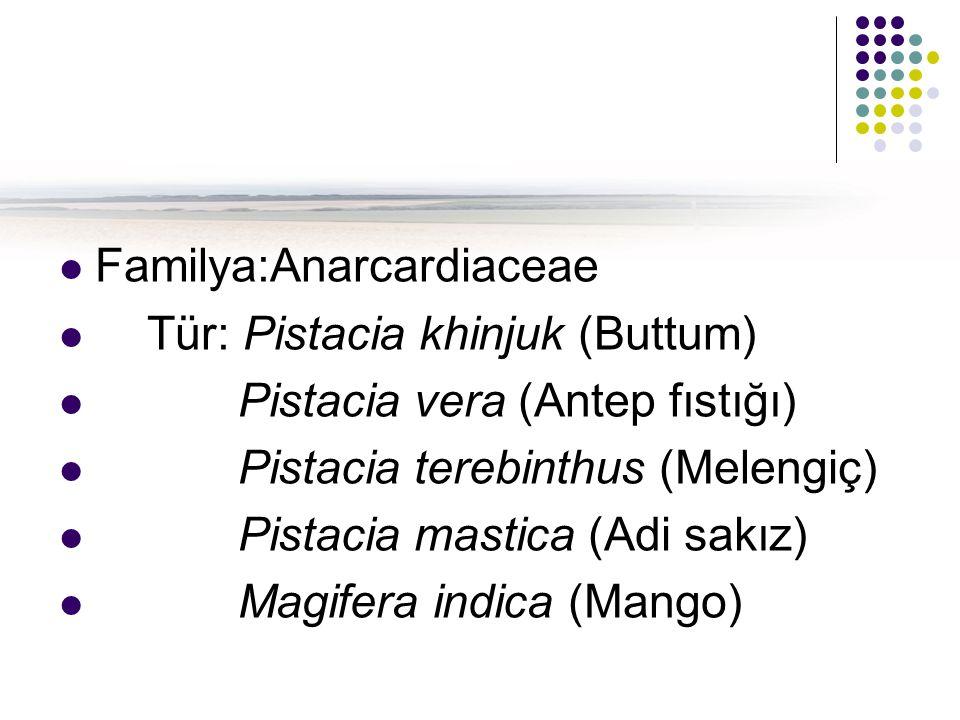 Familya:Anarcardiaceae Tür: Pistacia khinjuk (Buttum) Pistacia vera (Antep fıstığı) Pistacia terebinthus (Melengiç) Pistacia mastica (Adi sakız) Magifera indica (Mango)