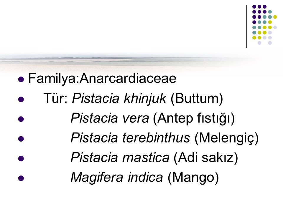Familya:Anarcardiaceae Tür: Pistacia khinjuk (Buttum) Pistacia vera (Antep fıstığı) Pistacia terebinthus (Melengiç) Pistacia mastica (Adi sakız) Magif