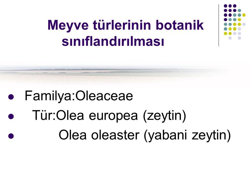 Meyve türlerinin botanik sınıflandırılması Familya:Oleaceae Tür:Olea europea (zeytin) Olea oleaster (yabani zeytin)