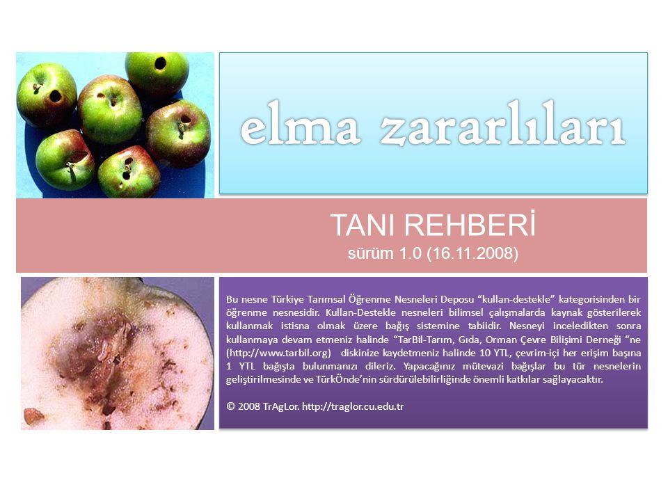 meyve yaprakbükeni ( Archips argyrospilus Walke r ) fruit tree leafroller
