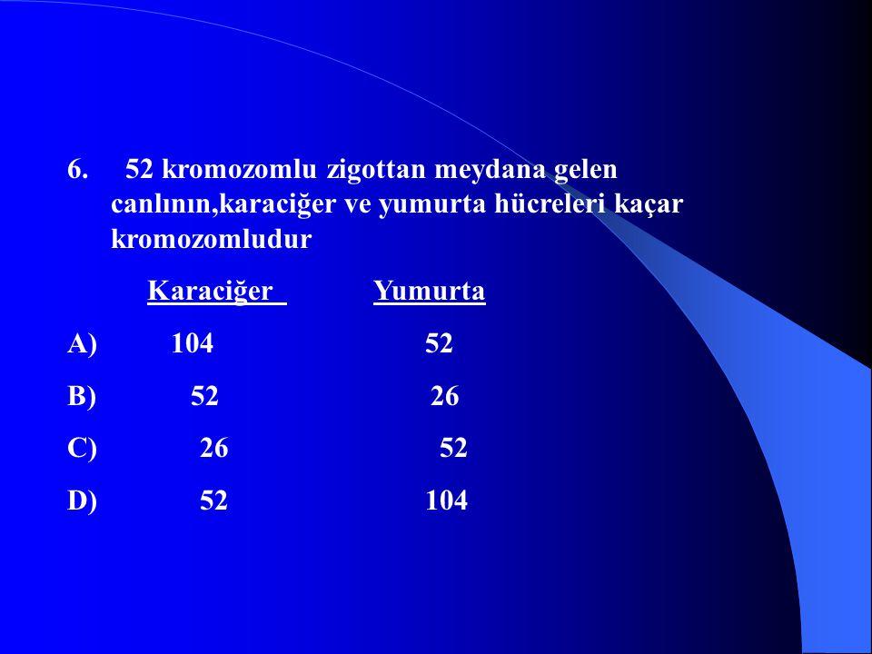 6. 52 kromozomlu zigottan meydana gelen canlının,karaciğer ve yumurta hücreleri kaçar kromozomludur Karaciğer Yumurta A) 104 52 B) 52 26 C) 26 52 D) 5
