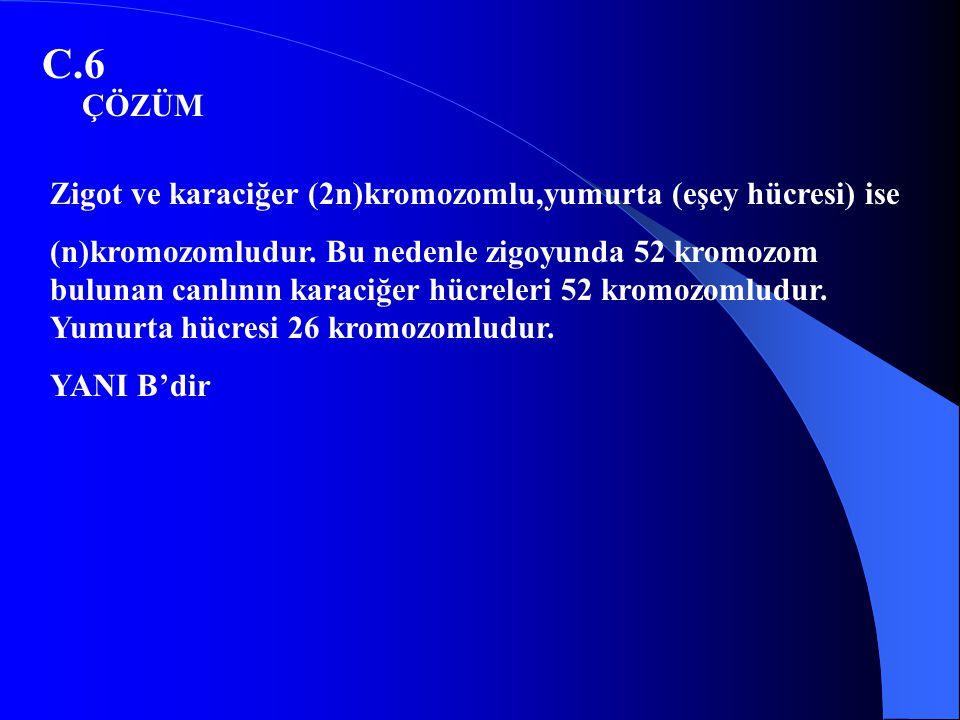 C.6 Zigot ve karaciğer (2n)kromozomlu,yumurta (eşey hücresi) ise (n)kromozomludur. Bu nedenle zigoyunda 52 kromozom bulunan canlının karaciğer hücrele