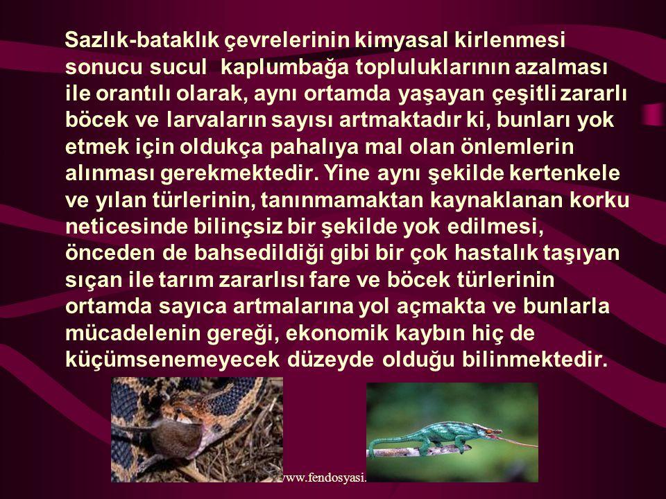 www.fendosyasi.com Sazlık-bataklık çevrelerinin kimyasal kirlenmesi sonucu sucul kaplumbağa topluluklarının azalması ile orantılı olarak, aynı ortamda