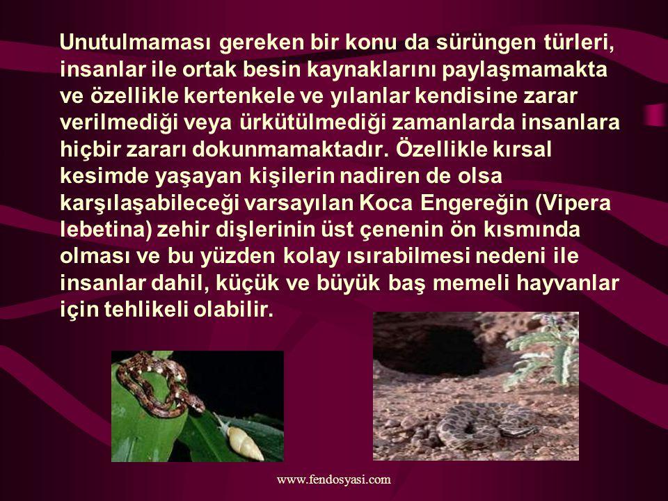 www.fendosyasi.com Unutulmaması gereken bir konu da sürüngen türleri, insanlar ile ortak besin kaynaklarını paylaşmamakta ve özellikle kertenkele ve y