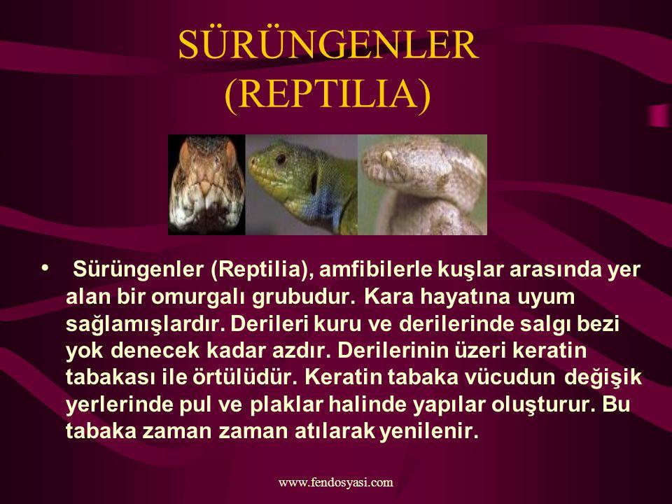 www.fendosyasi.com SÜRÜNGENLER (REPTILIA) Sürüngenler (Reptilia), amfibilerle kuşlar arasında yer alan bir omurgalı grubudur. Kara hayatına uyum sağla