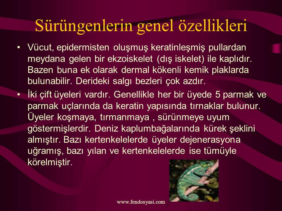 www.fendosyasi.com Sürüngenlerin genel özellikleri Vücut, epidermisten oluşmuş keratinleşmiş pullardan meydana gelen bir ekzoiskelet (dış iskelet) ile