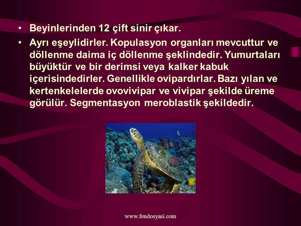 www.fendosyasi.com Beyinlerinden 12 çift sinir çıkar. Ayrı eşeylidirler. Kopulasyon organları mevcuttur ve döllenme daima iç döllenme şeklindedir. Yum