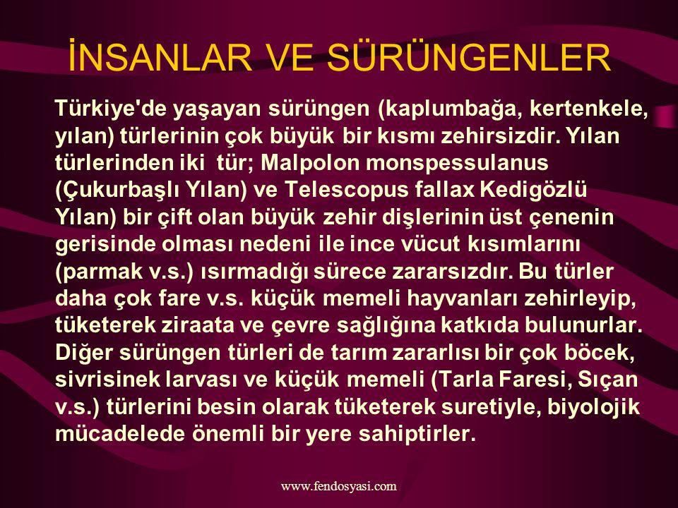 www.fendosyasi.com İNSANLAR VE SÜRÜNGENLER Türkiye'de yaşayan sürüngen (kaplumbağa, kertenkele, yılan) türlerinin çok büyük bir kısmı zehirsizdir. Yıl