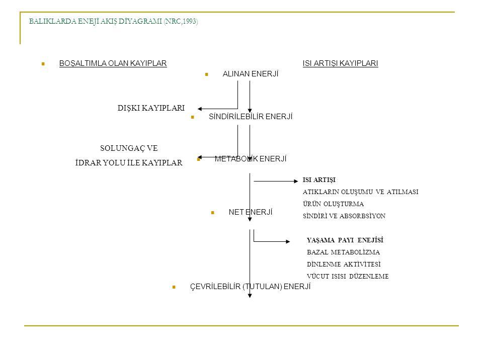 BALIKLARDA ENEJİ AKIŞ DİYAGRAMI (NRC,1993) BOŞALTIMLA OLAN KAYIPLAR ISI ARTIŞI KAYIPLARI ALINAN ENERJİ SİNDİRİLEBİLİR ENERJİ METABOLİK ENERJİ NET ENERJİ ÇEVRİLEBİLİR (TUTULAN) ENERJİ DIŞKI KAYIPLARI SOLUNGAÇ VE İDRAR YOLU İLE KAYIPLAR ISI ARTIŞI ATIKLARIN OLUŞUMU VE ATILMASI ÜRÜN OLUŞTURMA SİNDİRİ VE ABSORBSİYON YAŞAMA PAYI ENEJİSİ BAZAL METABOLİZMA DİNLENME AKTİVİTESİ VÜCUT ISISI DÜZENLEME