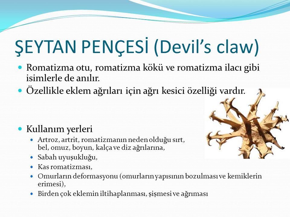 ŞEYTAN PENÇESİ (Devil's claw) Romatizma otu, romatizma kökü ve romatizma ilacı gibi isimlerle de anılır. Özellikle eklem ağrıları için ağrı kesici öze