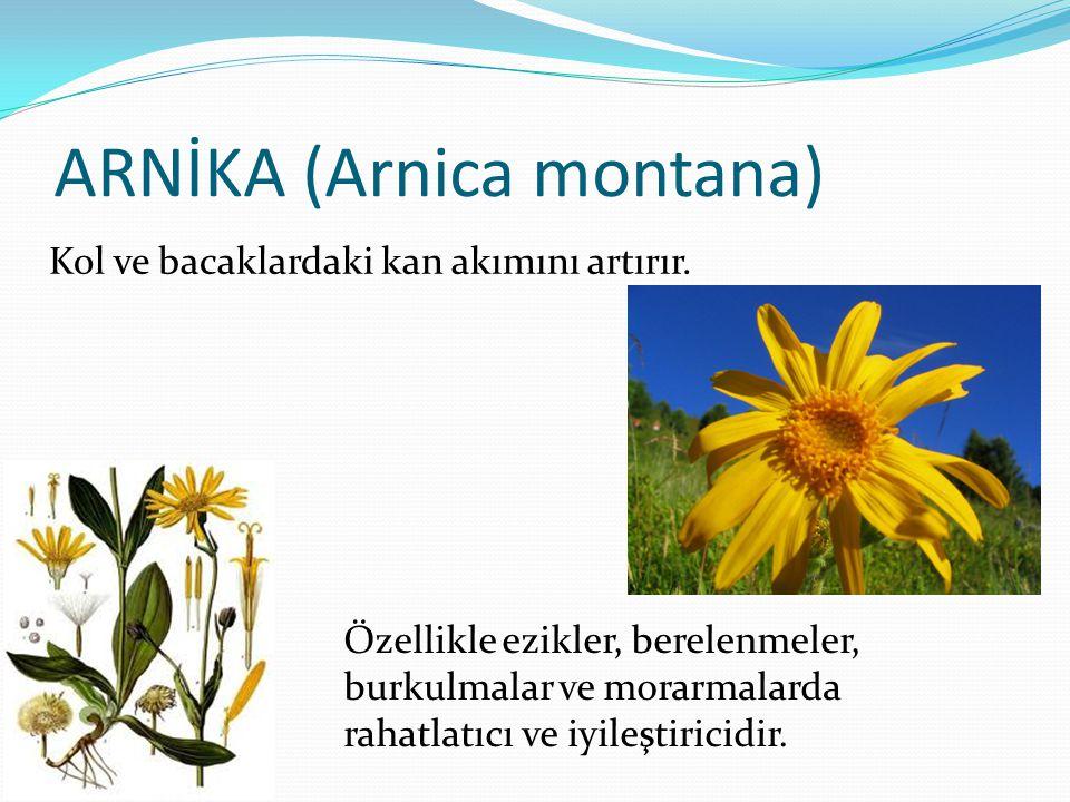 ARNİKA (Arnica montana) Özellikle ezikler, berelenmeler, burkulmalar ve morarmalarda rahatlatıcı ve iyileştiricidir. Kol ve bacaklardaki kan akımını a